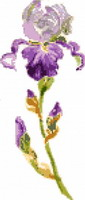 Light Purple iris, cross stitch pattern by FeeFeedille