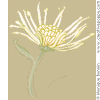 Autumn Haiku: petals of Chrysanthemum cross stitch pattern by Monique Bonnin